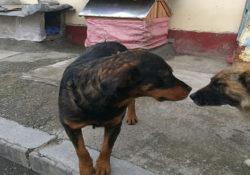 En La Paz y El Alto el maltrato animal está a la  orden del día