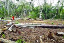 SPOTLIGHT I – Con un ardid se abrió paso a la exploración hidrocarburífera en tierra tacana