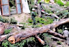 Áreas protegidas de La Paz y árboles urbanos están en constante peligro