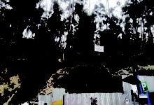 Loteadores, inmobiliarias, tala y quema amenazan las áreas protegidas paceñas