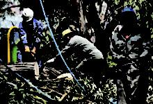"""Pese a ser """"intocables"""" en La Paz se talan árboles continuamente"""